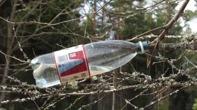 Березовый сок полезные свойства и противопоказания